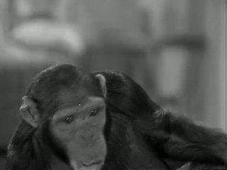 Tarzans ใหม่ york adventure (1942)