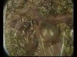 Rondborstig lichaam paint video-