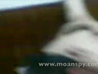 Zeldzaam egyptisch hoorndrager