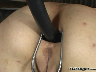 assfucking, toys, anal sex, pussy licking
