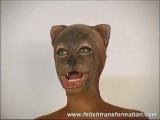 調皮 的陰戶 cat 傳播
