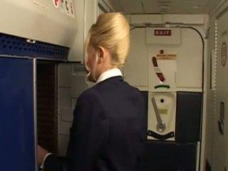 jednotný, stewardess
