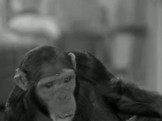 Tarzans New York Adventure (1942)